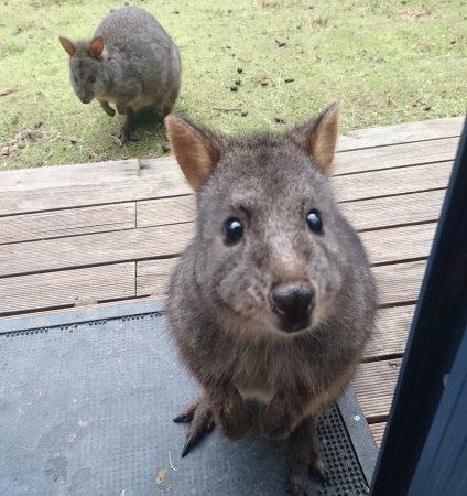Huonville, Australië: IMG_20170717_114354_496_large.jpg