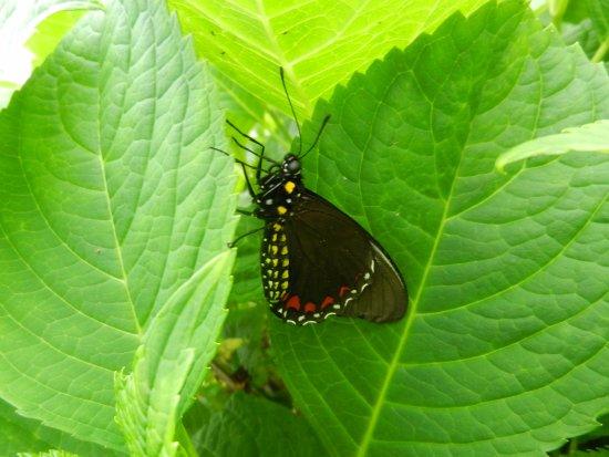 Deer Lake, Καναδάς: Butterfly garden