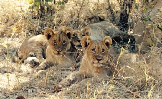 Linyanti Reserve, Botswana: Safari