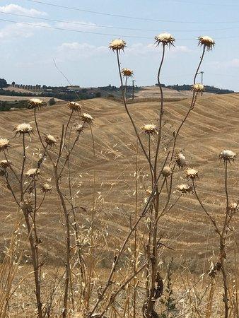 Asciano, Italien: photo0.jpg