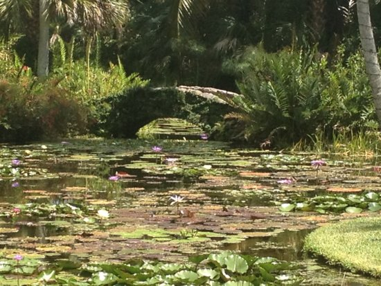 McKee Botanical Garden: Stone bridge and lily pond