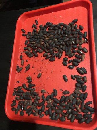 Cotundo, Ecuador: Coffee making class