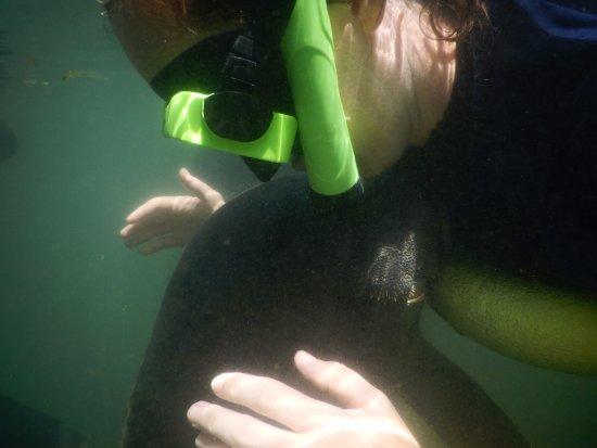 Fun 2 Dive: Kisses