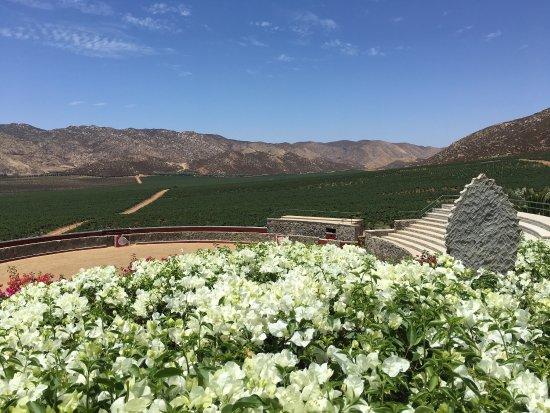 Valle de Guadalupe, Mexico: photo1.jpg