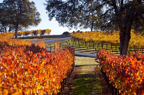 Grass Valley, Kalifornien: Fall in the Vineyard