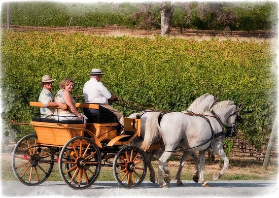 Grass Valley, CA: Carriage rides in the vineyard during Harvest Festival