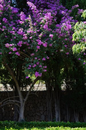‪‪Bunyola‬, إسبانيا: Purple flowers‬