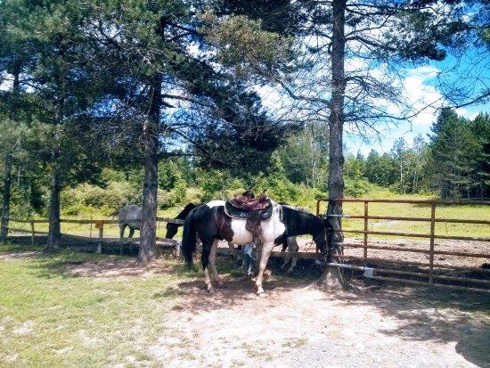 Lodi, NY: Whiskey saddled up