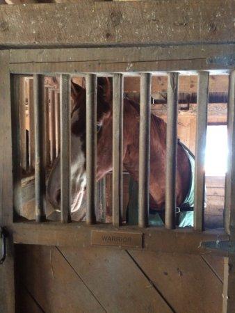 Meadow Farm Bed and Breakfast: Horse barn