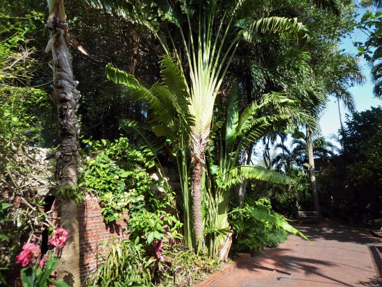 West Martello Tower: Travelers Palm
