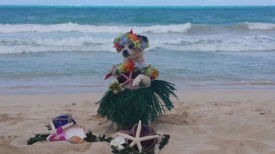 Aloha Private Tours: beautiful bali <3