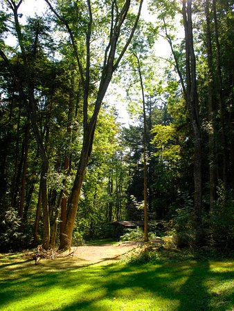 Surrey, Canada: Sunnyside Acres Urban Forest