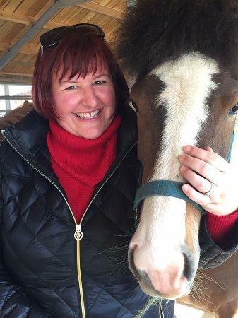Reykholt, Islândia: Happy Horses Happy people :)