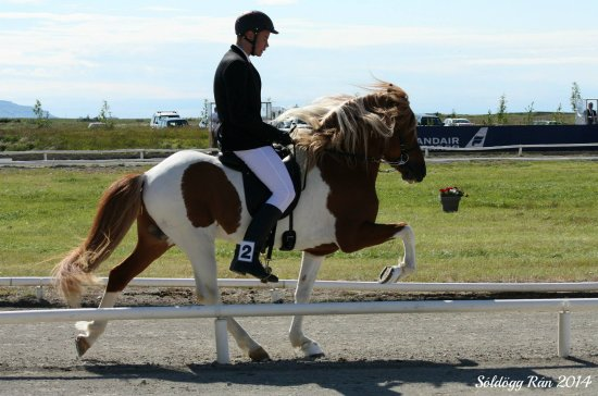 Reykholt, Iceland: Our son Konráð Axel Gylfason riding our  beatuful stallion Vörður from Sturlureykir