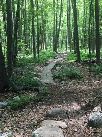 Leominster, MA: Walkway on the forest loop