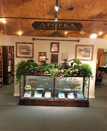 Apopka Museum - Fern Display on feature wall