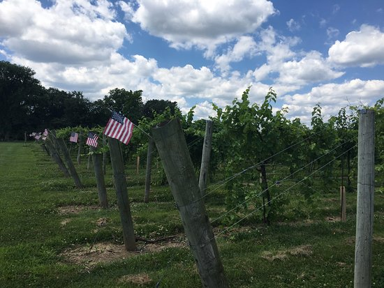 Buckingham Valley Vineyard