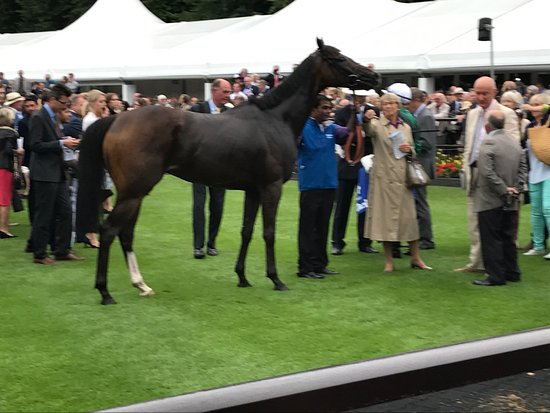 Newmarket, UK: After the race