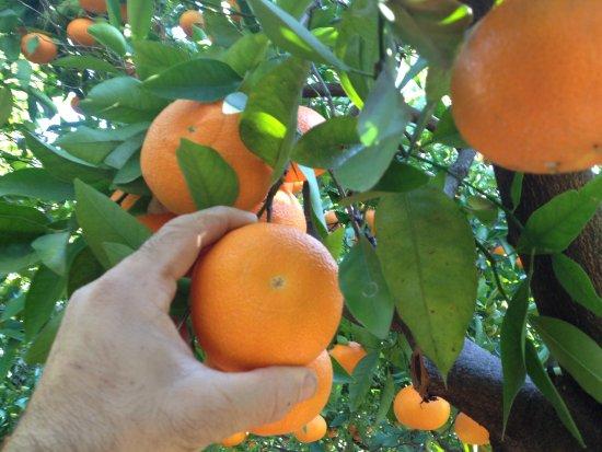 Mr Frutas