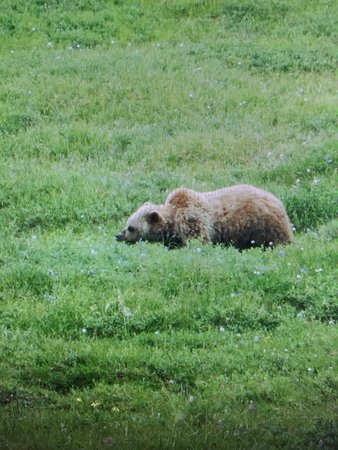 Denali Visitor Center: photo0.jpg