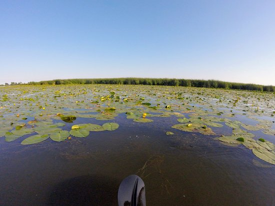 Leamington, Canada: Kayaking through the marsh is a great way to relax