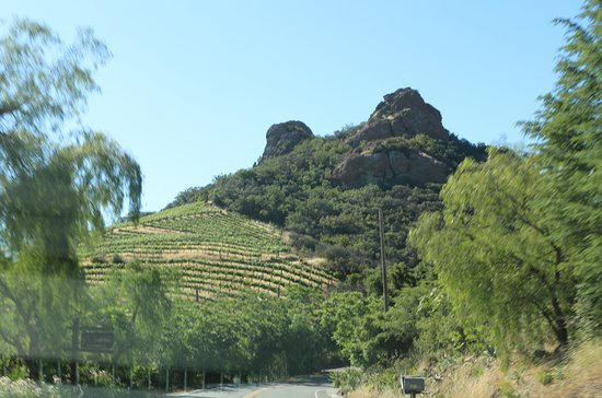 Thousand Oaks, CA: Vineyards