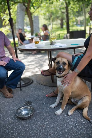 Olympic Valley, CA: dog friendly patio dining