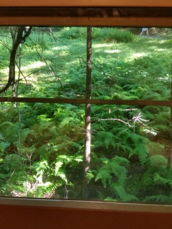 Ash Grove Mountain Cabins & Camping: View from Kitchen