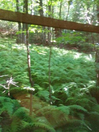Ash Grove Mountain Cabins & Camping-billede