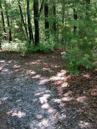 Ash Grove Mountain Cabins & Camping: Trail