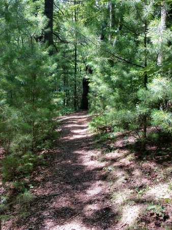 Ash Grove Mountain Cabins & Camping: Hiking Trail