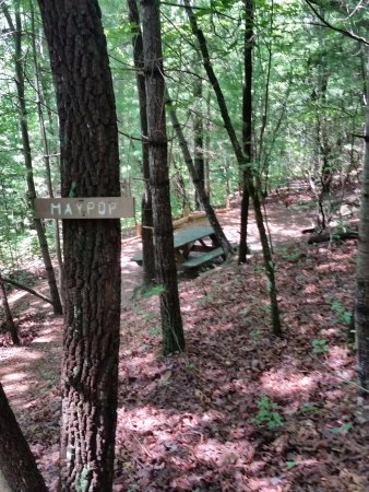 Ash Grove Mountain Cabins & Camping: A Campsite
