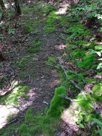 Ash Grove Mountain Cabins & Camping: Moss growing on the hiking trail.