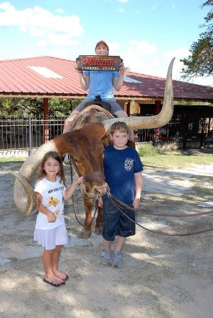 Mayan Dude Ranch: Photo opportunity on a real tame longhorn bull at Mayan Ranch
