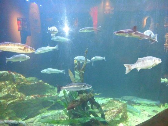 Etaples, Francja: De beaux poissons