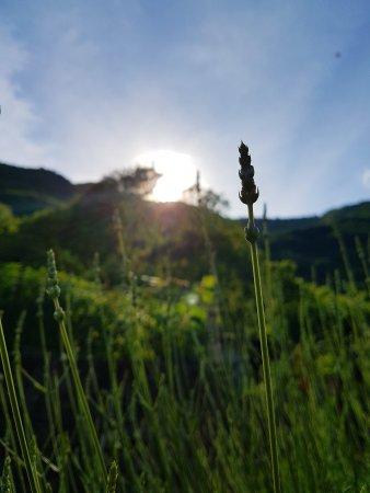 Lasnigo, Italia: Da Elena