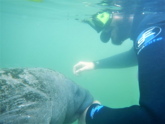 Fun 2 Dive: South African's personal encounter.