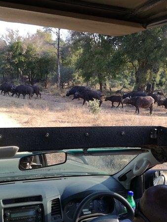 Hazyview, Güney Afrika: IMG_20170719_151005_large.jpg