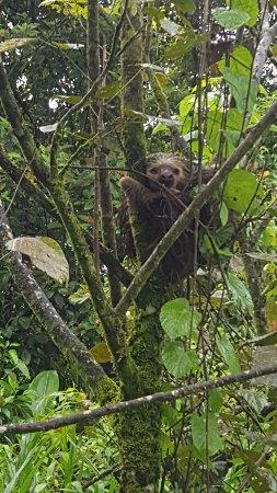 Tortuguero, Costa Rica: IMG-20170718-WA0014_large.jpg