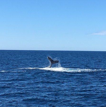 Redcliffe, Australien: photo1.jpg