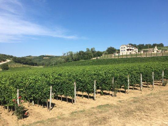 Momjan, كرواتيا: Excellent wine and good advise