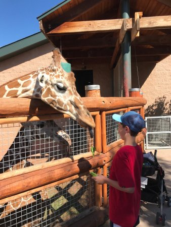 Cheyenne Mountain Zoo: photo0.jpg
