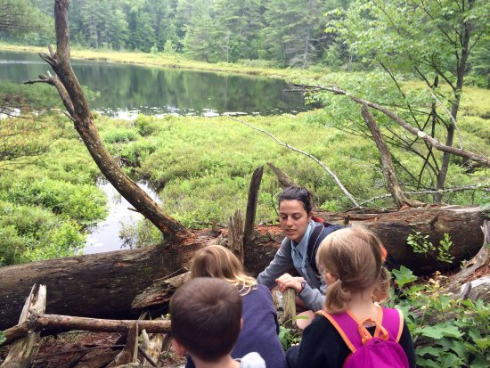 Greenfield, NH: Bog hike with Ranger Julia. Learning about beavers, glaciers, plants and bogs.