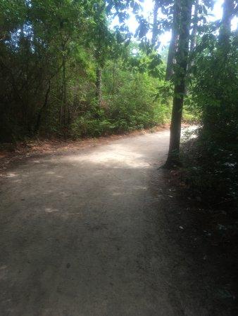 Southern Pines Foto