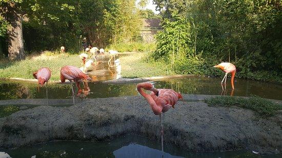 Tiergarten Schoenbrunn - Zoo Vienna : 20170706_173633_large.jpg