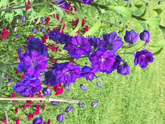 Thuya Gardens: photo0.jpg