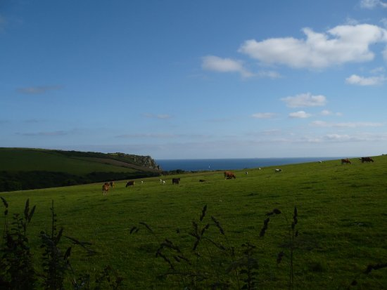 Veryan, UK: Sunny Day View of Sea from Garden