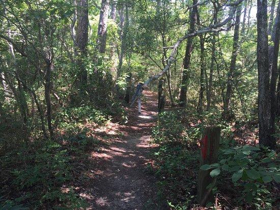 Kill Devil Hills, Carolina do Norte: photo2.jpg
