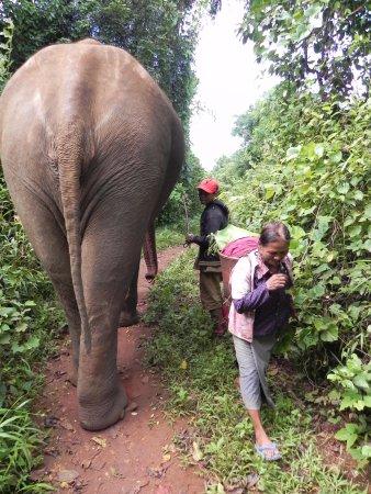 Sen Monorom, Camboya: Elephant Traffic