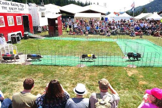 Puyallup, WA: Pig race